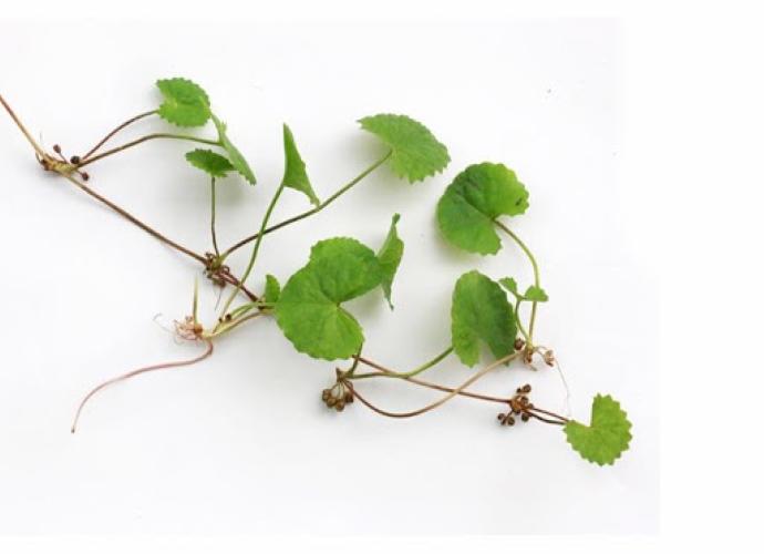 """Rau má là loài cây thân thảo nhỏ nhắn, mọc ở nhiều nơi. Tuy nhỏ vậy mà lại có """"võ"""" đó nha. Trong rau má chứa hàm lượng chất xơ dồi dào, nhiều Vitamin A, B1, B2, B3, C… Nhờ vào đặc tính sát trùng, rau má có tác dụng ức chế vi khuẩn gây mụn. Không chỉ trị mụn mà rau má còn khả năng làm lành sẹo, dưỡng sáng da mờ vết thâm. Đồng thời còn ngăn ngừa lão hóa và phục hồi da rất hiệu quả. Hiện nay người ta đã ứng dụng rau má vào trong bảng thành phần của các sản phẩm dành cho da mụn, nhạy cảm vì công dụng tuyệt vời và độ lành tính của nó.  Trên đây là những thành phần trị mụn tốt và có công dụng với bản thân mình. Làn da mỗi người là khác nhau nên qua bài viết mình hy vọng có thể cập nhật thêm những thông tin hữu ích để dễ dàng chọn lựa sản phẩm chăm da an toàn hơn nha <3"""
